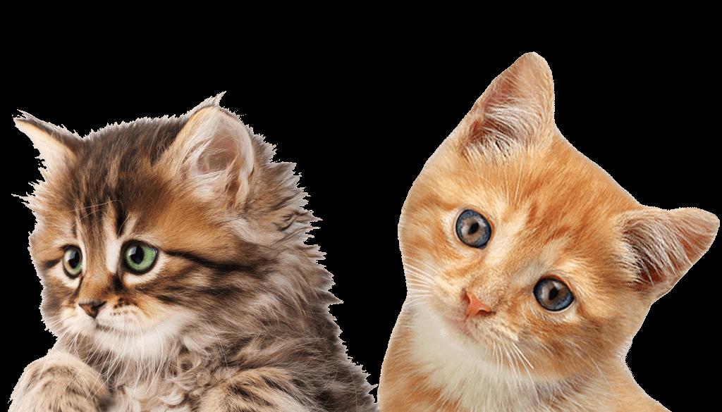 Cat Png50539 1