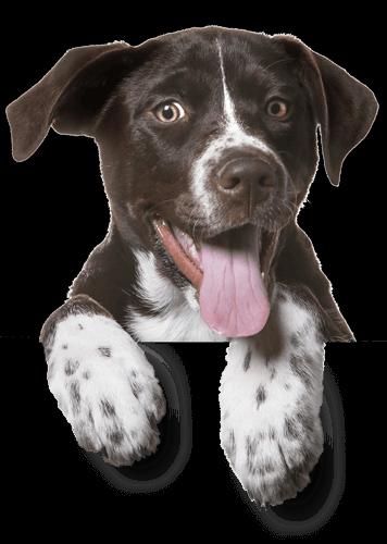 Dog New