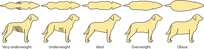 Βαθμολογία Κατάστασης Σώματος Σκύλου (Bcs)