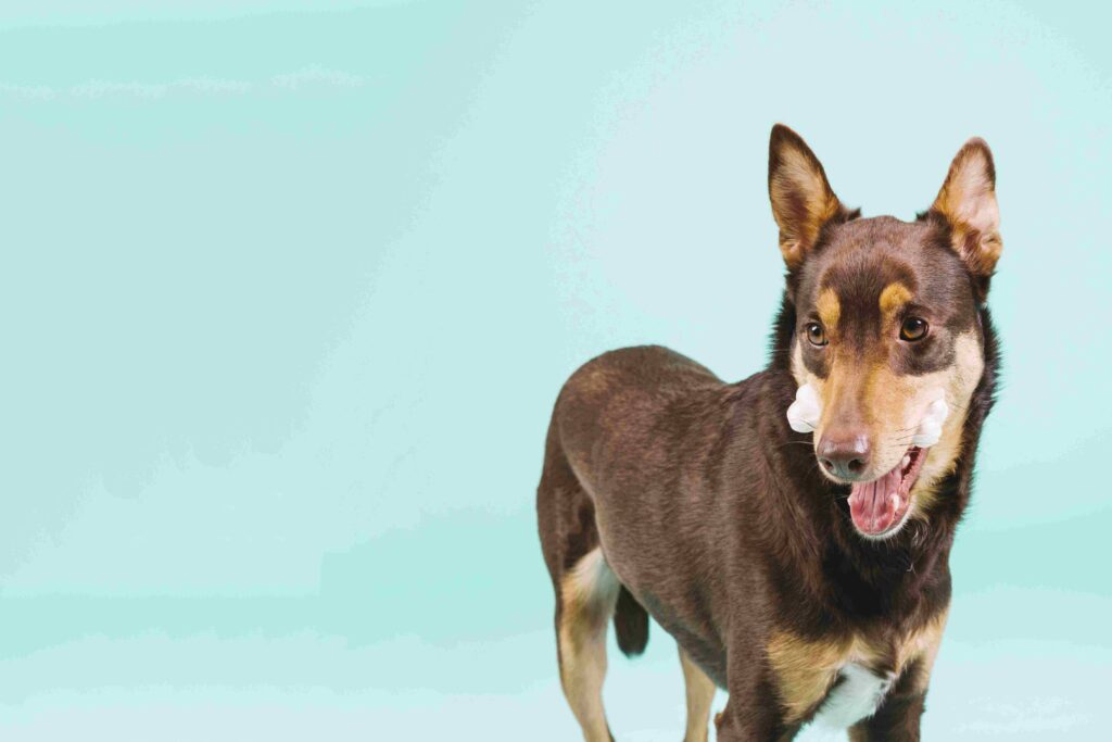 Σκύλος Με Κόκκαλο Στο Στόμα. Η Καλύτερη Τροφή Σκύλου.