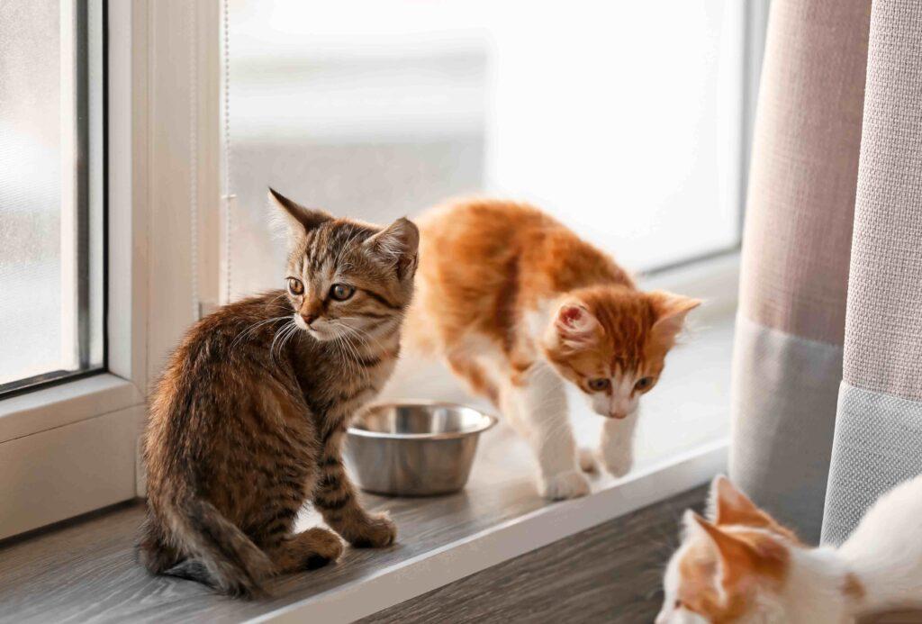 Ξηρά Τροφή Γάτας, Ειδη Γατας, Γαλα Για Γατακια, Μπιμπερο Για Γατακια,