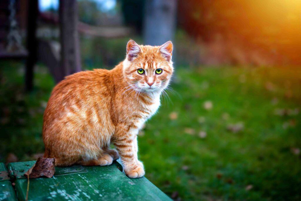 Ειδη Γατας, Γαλα Για Γατακια, Μπιμπερο Για Γατακια, Ξηρα Τροφη Γατασ